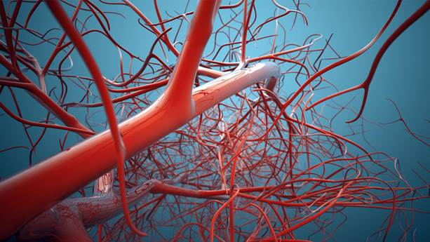 Magnified vascular system showing red veins on a blue background.