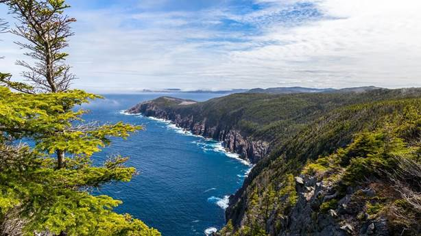 <p>East Coast Trail</p> <p> </p>