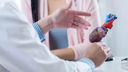 Doctor holding model of heart